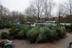 Weihnachtsbaumverkauf 2007